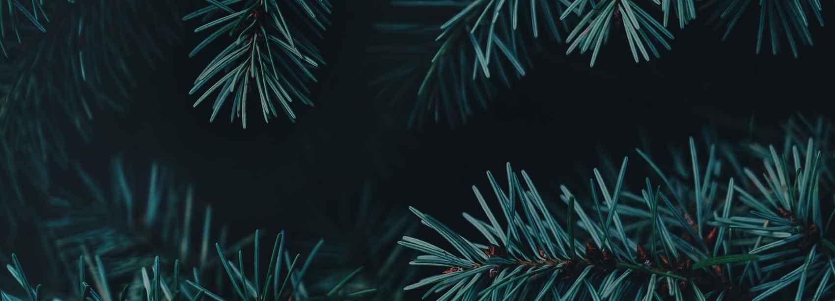 Cabecera-navidad-opt